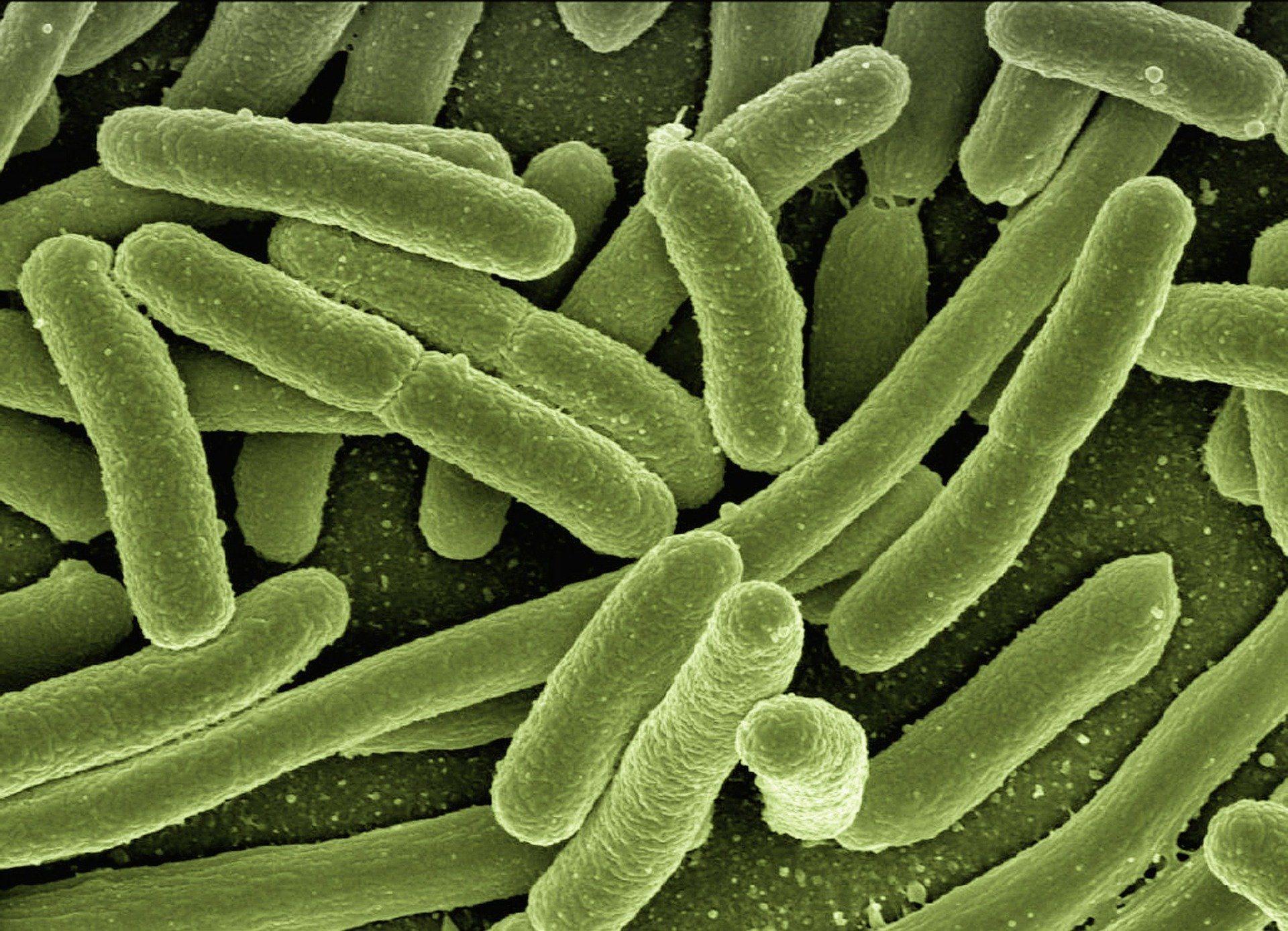 Dimagrire batteri intestinali