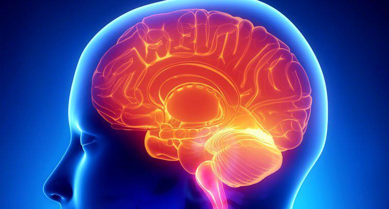 I grassi saturi fanno bene al cervello