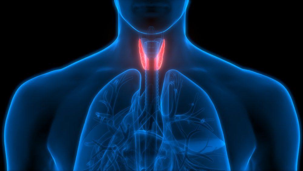 Tiroidite di Hashimoto, funzionamento tiroide